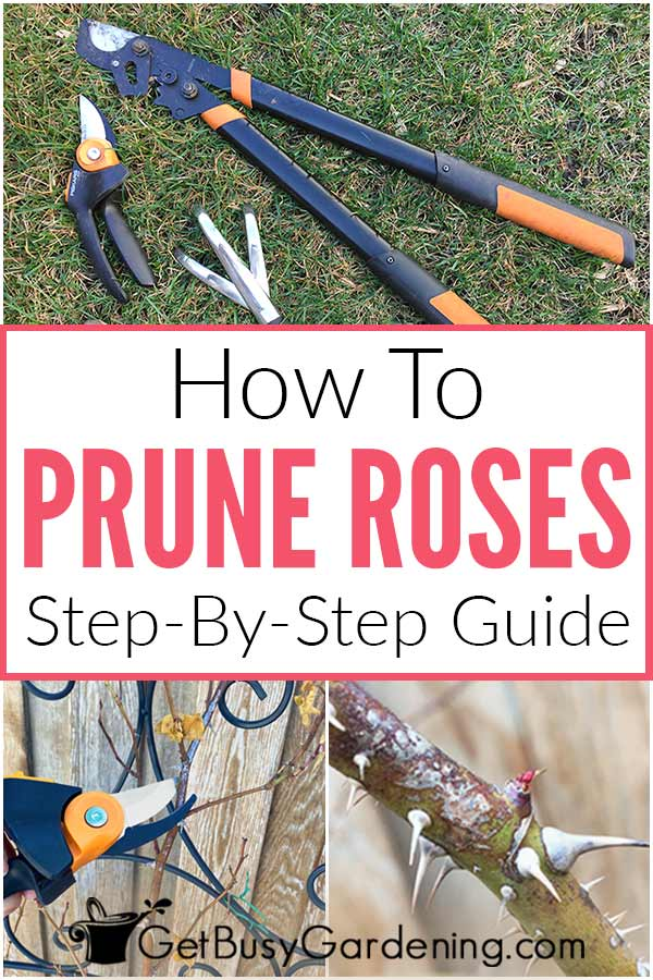 How To Prune Roses: Step-By-Step Guide