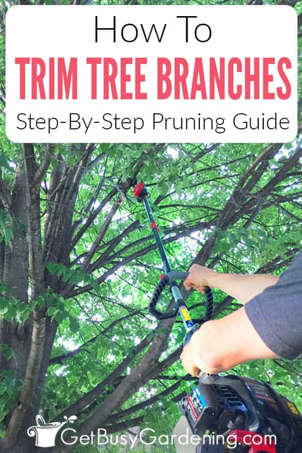 How To Trim Tree Branches: Step-By-Step Pruning Guide